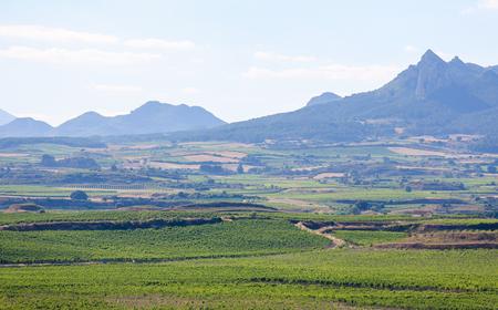 rioja: View on the vineyards of the Rioja Alta wine region near Haro, La Rioja, Spain