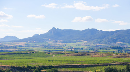 View on the vineyards of the Rioja Alta wine region near Haro, La Rioja, Spain