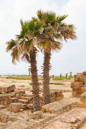 Palm trees and ruins of the ancient Roman city Caesarea at the Mediterranean Coast in Israel
