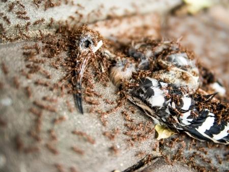 carcass: fotografie van een vogel karkas