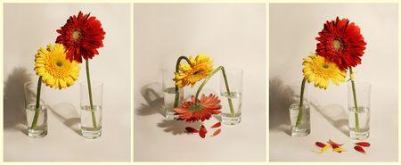 triptych: triptych Gerberas Stock Photo