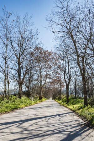 vanishing point: wooded road