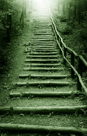 Stairway to heaven in mystic forest photo