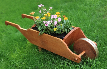 Wheelbarrow full of colorful flowers on a grass lawn photo