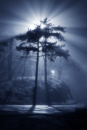 Foggy night with beautiful glowing beam of light