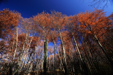environmen: Autumn leaves foliage with blue sky Stock Photo