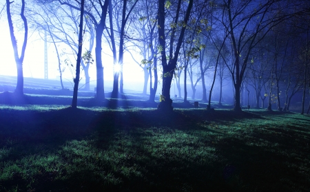 Mystical forest in blue color at evening