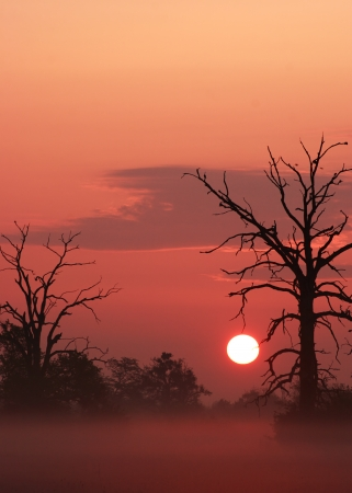 sunup: Sunrise among trees in misty area Stock Photo