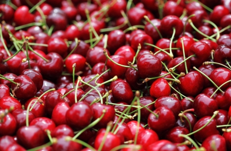 crimson colour: Some beautiful sweet cherry in pile