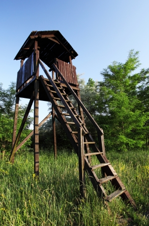 raised viewpoint: Lookout tower for hunters hidden in the forest