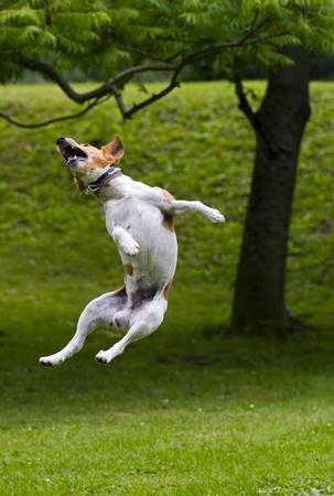 dog health: Buon salto cane in aria