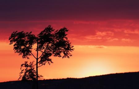 Beauty colorful sky at sundown photo