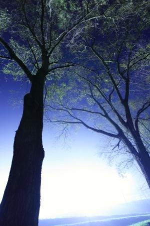 lightbeam: Solitude tree in urban area