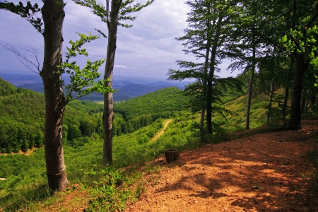 Valley from mountain with forest Stock Photo - 16717963