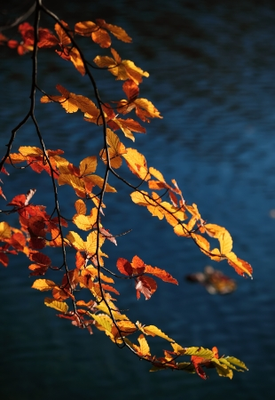 Beautiful autumn branch water in bakcground photo