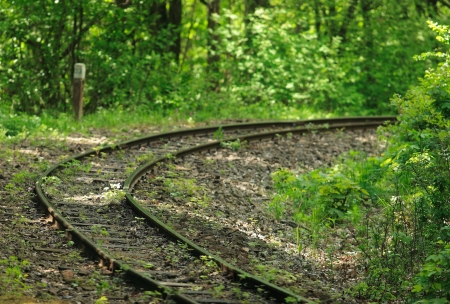 narrow gauge railways: Train track in forest in spring Stock Photo