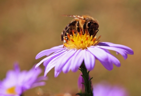 Image of beautiful violet flower and bee photo