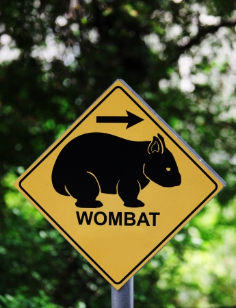 Wombat sign with arrow in forest photo
