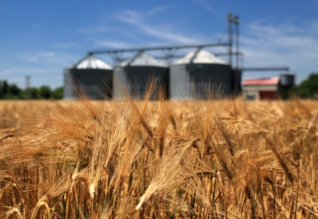 grain: Farm, wheat field with grain silos for agriculture