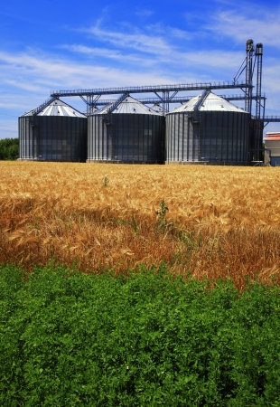 Farm, wheat field with grain silos for agriculture photo