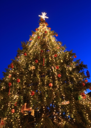 Christmas tree outdoor at blue sky photo