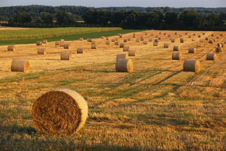 Beautiful landscape with straw bales in end of summer photo