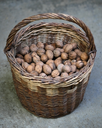 willow fruit basket: Heap of walnuts in wicker basket