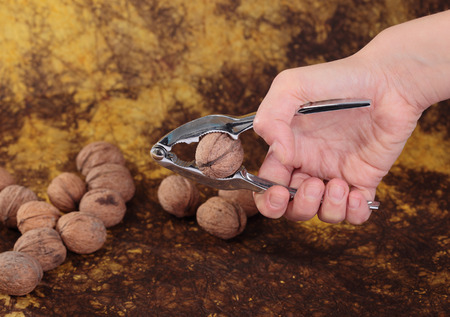 Hand hold nutcracker walnuts on background photo