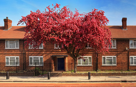 Brick house in London with blooming tree
