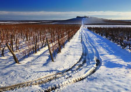 panorama view: Paesaggio della vigna in inverno scena vista panoramica Archivio Fotografico