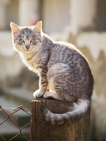 Tabby cat sit on fence outdoor Stock Photo