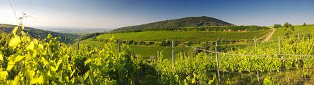 빌라 헝가리의 포도밭, 파노라마보기