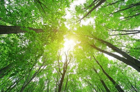 Green wood forest in spring Stock Photo
