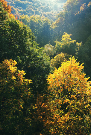 Colorful forest in valley in fall Stock Photo