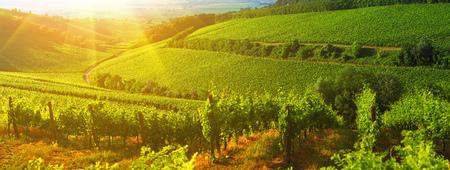 Wijngaard in Hongarije, panoramamening