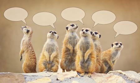 Grupo de observar surricats con burbujas de conversación Foto de archivo