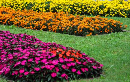 Colorful flowers in outdoor garden
