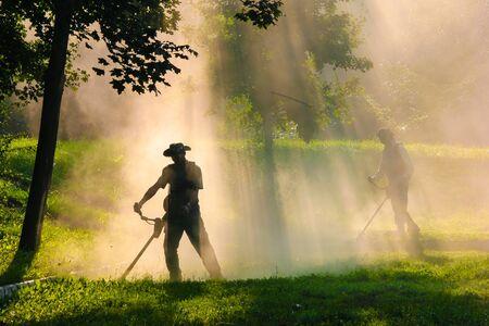 Leute, die Gras mit Freischneider im Freien schneiden Standard-Bild