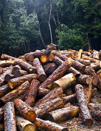 selva: A forest and its future, a bunch of logs.