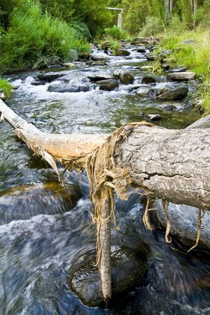 Fallen tree trunk over the river photo
