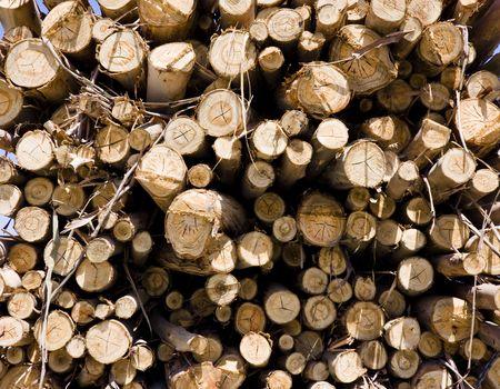 dozens: Dozens of dead trees making a woodpile. Stock Photo