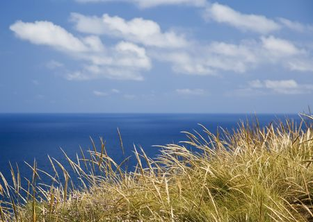sawgrass: Seagrass over blue oceanic background Stock Photo
