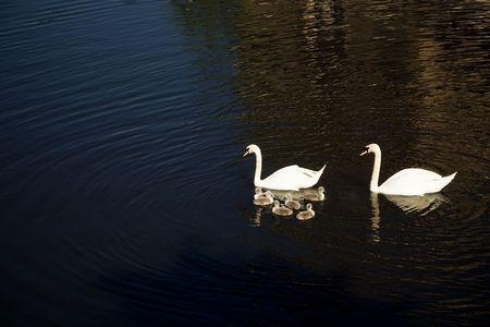 Swank family portrait over the Vltava river photo