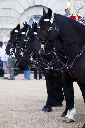 Horses from the British Household Cavalry in formation. photo