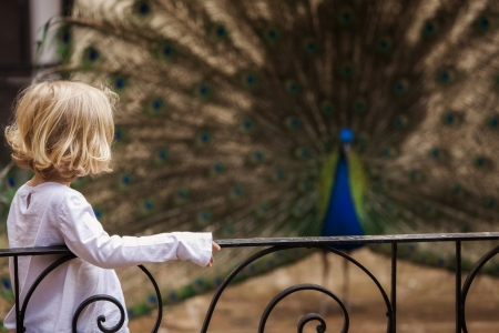 plummage: Young little girl meeting indian peacock. Focus on the girl.