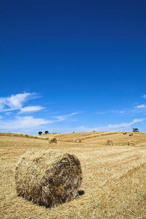 paisaje mediterraneo: T�pico paisaje mediterr�neo de Alentejo (Portugal), muy similar a la Toscana (Italia)