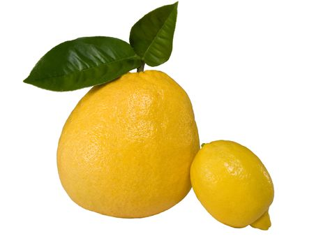 Huge lemon near a regular one
