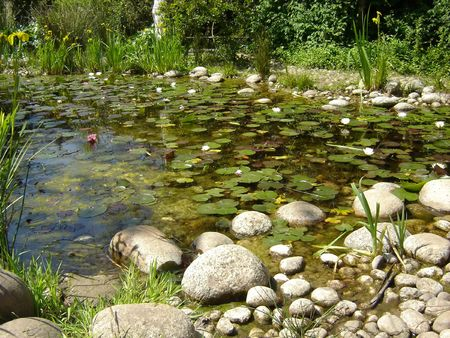 calming: Small pond filled with water lillies
