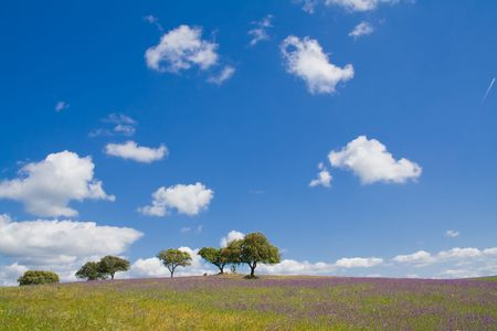 alentejo: Spring landscape in Alentejo, Portugal. Stock Photo