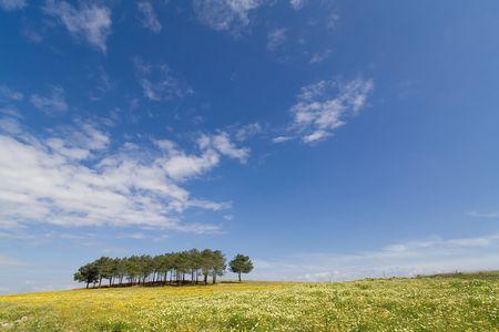 tree marigold: Spring landscape in Alentejo, Portugal.